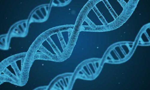 segnali genetici pubertà